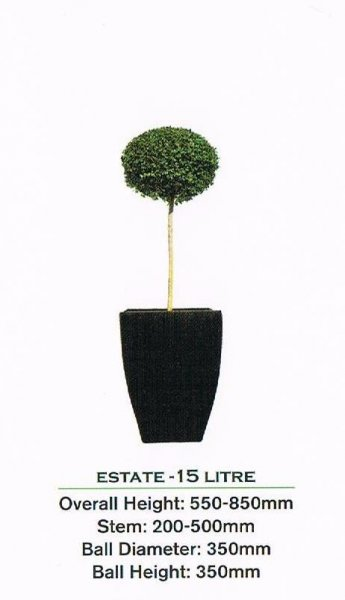 Topiary tree, single ball