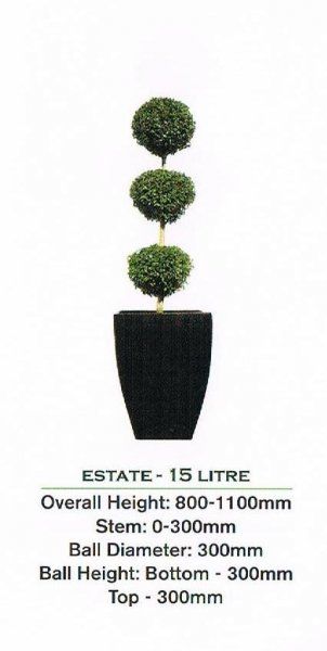 Topiary tree, triple ball