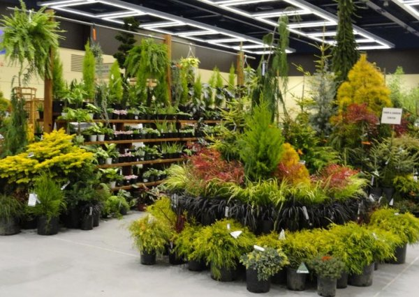 Plants - assorted (MEDIUM)