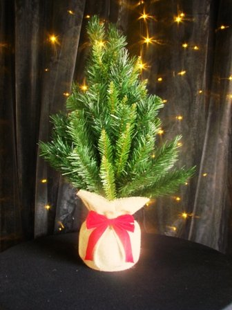 Miniature Xmas tree, mixed needle